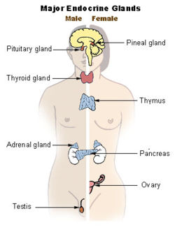 thyroid gland images